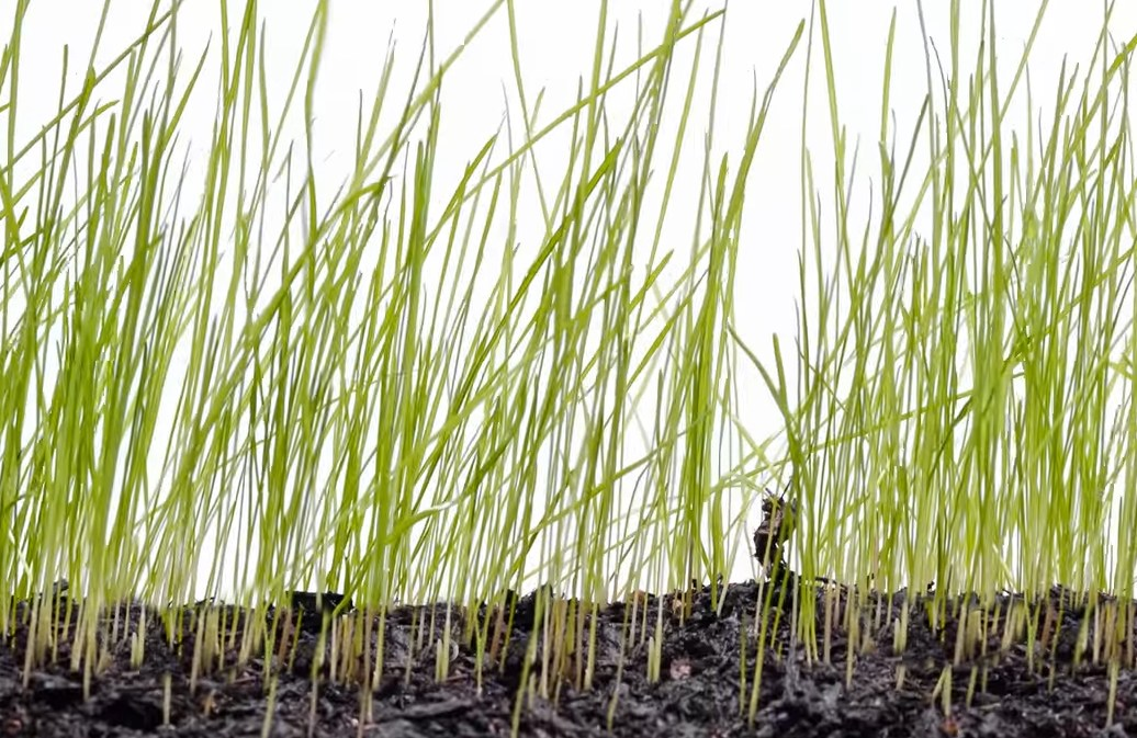 Zie gras groeien