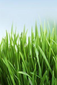 grasmaaien gezond gras
