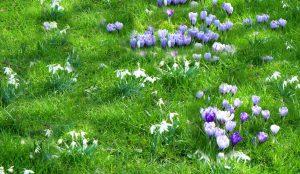 grasverzorging voorjaar