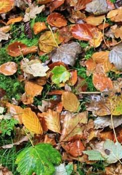 herfstblaadjes bladblazer