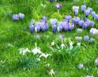 Wanneer grasmaaien voorjaar